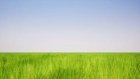 Krajobrazowa zielonej trawy roślina ilustracja wektor