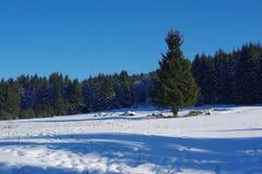 3 krajobrazowa zimy Obrazy Royalty Free