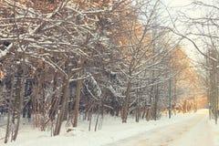 Krajobrazowa zimy aleja Obrazy Stock