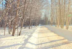 Krajobrazowa zimy aleja Obraz Stock