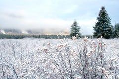 krajobrazowa zimy śniegu Zdjęcie Stock