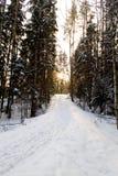 krajobrazowa zimy śniegu Fotografia Stock