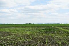 Krajobrazowe łąki Zdjęcie Royalty Free