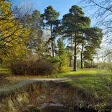 krajobrazowe jesień sosny Obrazy Royalty Free
