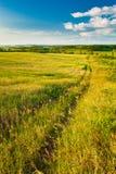 krajobrazowego lato Obraz Royalty Free