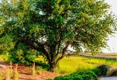 Krajobrazowej Charleston Południowa Karolina bagna shem zatoczki piękny molo Obraz Royalty Free