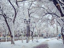 Krajobrazowej miasto ulicznej zimy śnieżni mrozowi drogowi samochody rozgałęziają się drzewa Zdjęcia Royalty Free