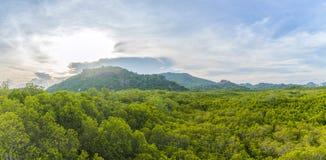 Krajobrazowi drzewa i góry zdjęcia royalty free