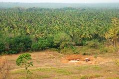 krajobrazowi drzewa kokosowe Fotografia Royalty Free