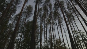 Krajobrazowi drzewa na suwaku zbiory wideo