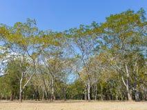 Krajobrazowi lasy w wiośnie z jaskrawym niebieskim niebem Obraz Royalty Free