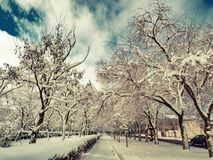 Krajobrazowi miasto parka zimy alei drzewa Obrazy Royalty Free