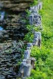Krajobrazowi projektów szczegóły Zdjęcia Royalty Free