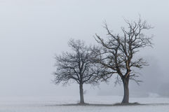 krajobrazowi samotni drzewa Obraz Stock