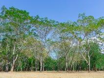Krajobrazowi zieleni lasy w lecie z jaskrawym niebieskim niebem Fotografia Stock