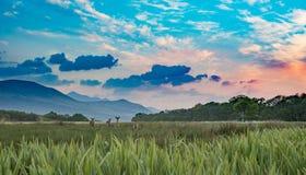 Krajobrazowy łąki pole z trawą w pomarańczowym zmierzchu, górach i chmurach, Killarney park narodowy, Irlandia fotografia stock