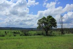 krajobrazowy łąkowy wiejski nieba lata rok Obrazy Stock