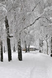 krajobrazowy śnieżny Obraz Royalty Free