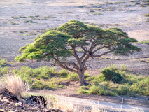 Krajobrazowy Afryka Fotografia Royalty Free