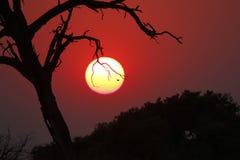 krajobrazowy Afrykanina zmierzch Zdjęcia Royalty Free