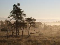 krajobrazowy bagna seli Zdjęcia Royalty Free
