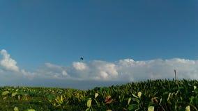 Krajobrazowy bluesky biel chmury thalenoi phattalung Thailand Fotografia Stock