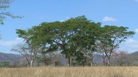 Krajobrazowy Costa Rica zbiory wideo