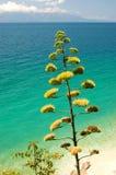 krajobrazowy Croatia lato Zdjęcia Stock