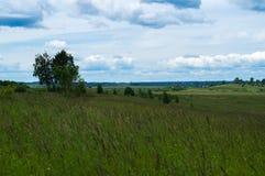 Krajobrazowy drzewo w śródpolnych błękit chmurach Obrazy Stock