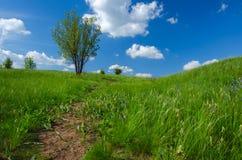 Krajobrazowy drzewo w polu Fotografia Royalty Free