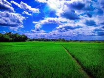 krajobrazowy fotografia ryż pole na mój wiosce obraz royalty free