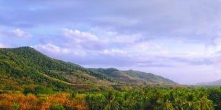 Krajobrazowy halny lasowy żyzny Zdjęcia Royalty Free