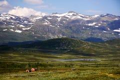 krajobrazowy halny Norway Fotografia Royalty Free