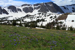 krajobrazowy halny Wyoming Obraz Stock