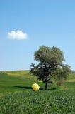 Krajobrazowy i żółty parasol Fotografia Royalty Free