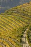 krajobrazowy jesień winnica Zdjęcia Stock