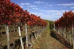 krajobrazowy jesień winnica Zdjęcie Royalty Free