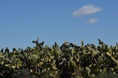 Krajobrazowy kaktus Obrazy Royalty Free