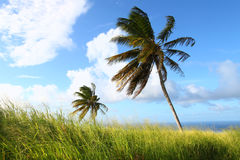 krajobrazowy Kitts święty zdjęcia stock