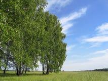 krajobrazowy lato Fotografia Stock