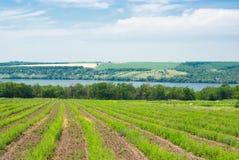 krajobrazowy lato Ukraine Obraz Royalty Free