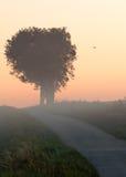 krajobrazowy mglisty Zdjęcie Royalty Free