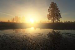 krajobrazowy mglisty ranek Jaskrawy słońce iluminuje jezioro wodę Fotografia Royalty Free