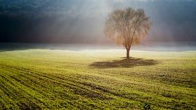 krajobrazowy minimalny obraz royalty free