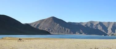krajobrazowy mongolian Zdjęcia Stock