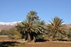 krajobrazowy Morocco Zdjęcia Stock