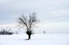 krajobrazowy mroźny Fotografia Royalty Free
