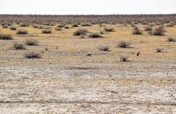 krajobrazowy Namibia Zdjęcia Stock