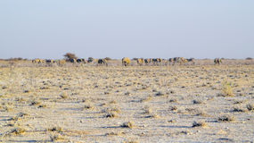 krajobrazowy Namibia Obrazy Stock