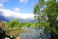Krajobrazowy ogród zdjęcie stock